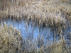 photo of wetlands
